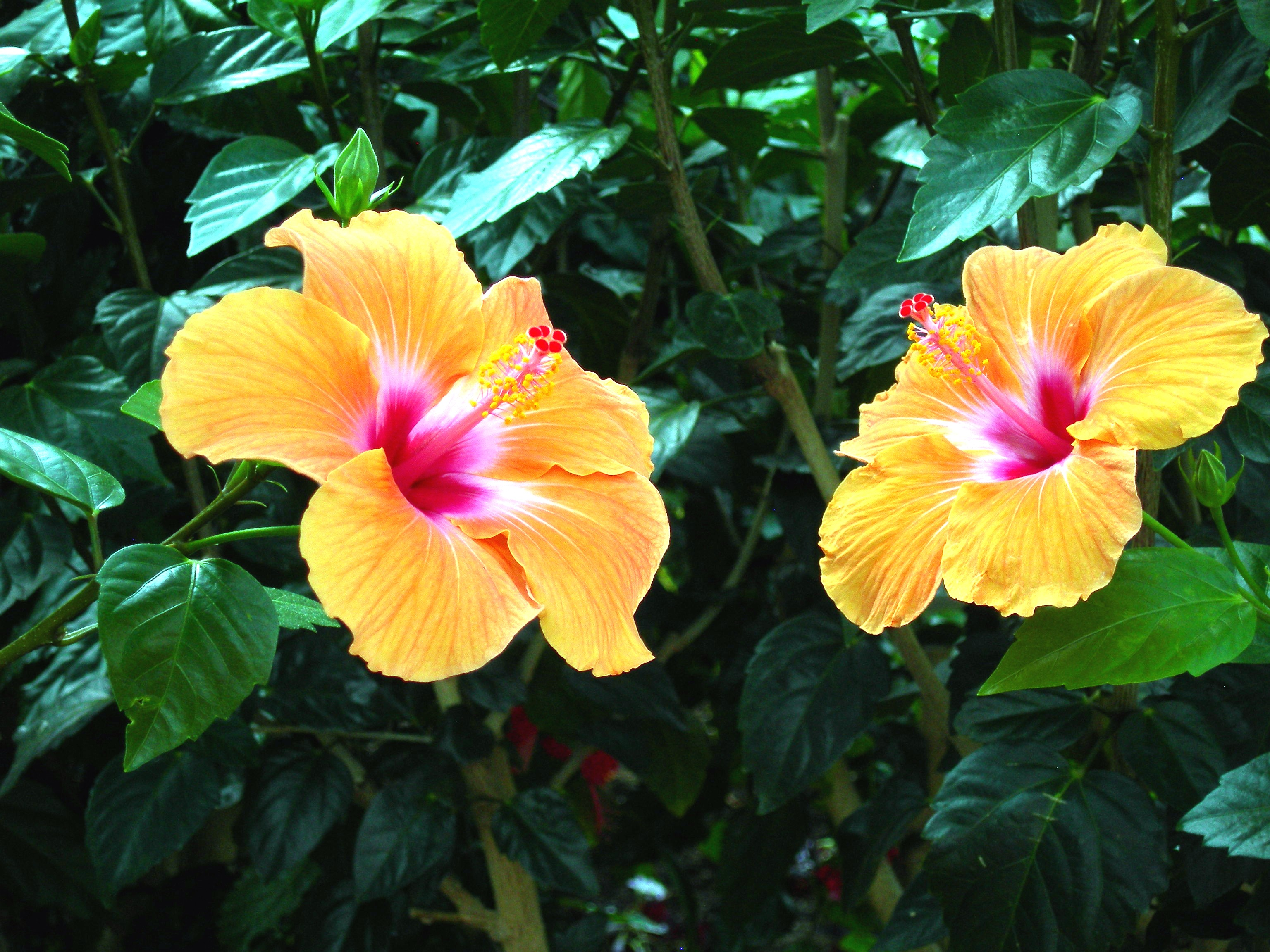Living wittily for the beauty and fun of the earth thanks be these are amongst the most beautiful flowers in the world way ahead of orchids for me though the flower only lasts a day or two izmirmasajfo