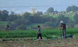 Romanian-children-working-006
